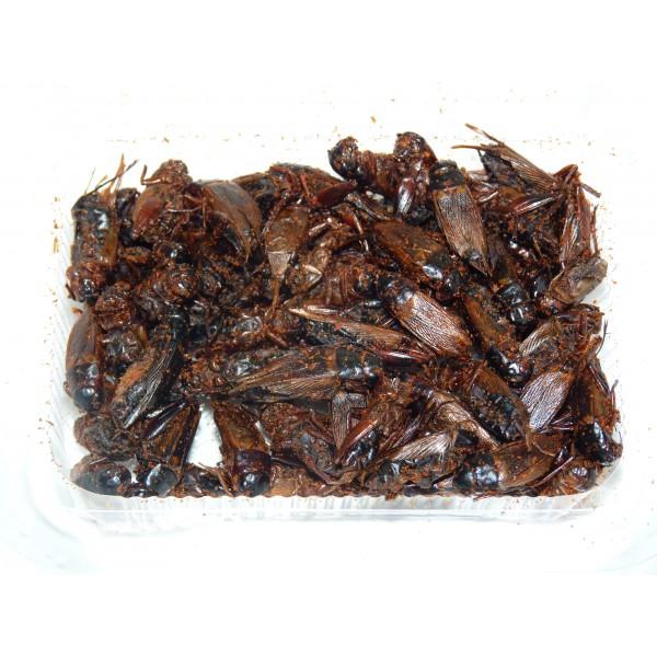 grillons grillons manger insectes comestibles. Black Bedroom Furniture Sets. Home Design Ideas