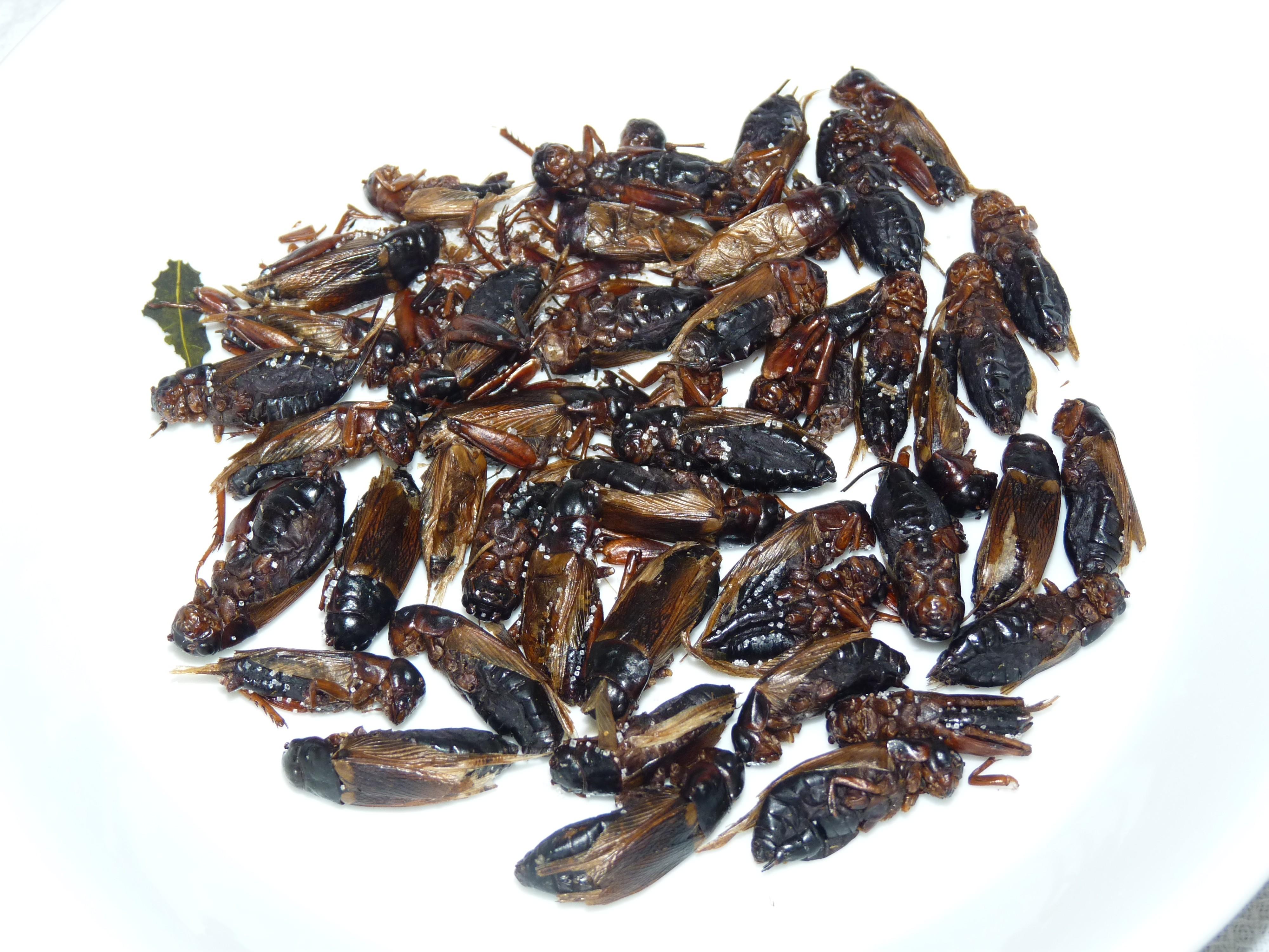 """Résultat de recherche d'images pour """"scarabée comestibles"""""""